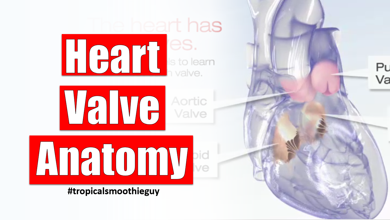 Heart Valve Anatomy Archives -